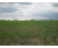 Teren agricol 5,000 mp in Clinceni, Ilfov
