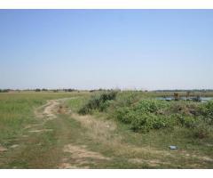 Teren agricol 43300 mp, Bolintin-Deal, Giurgiu