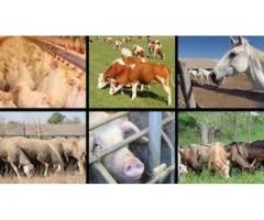 Ingrijitori ferma de animale Irlanda/ 1900 euro